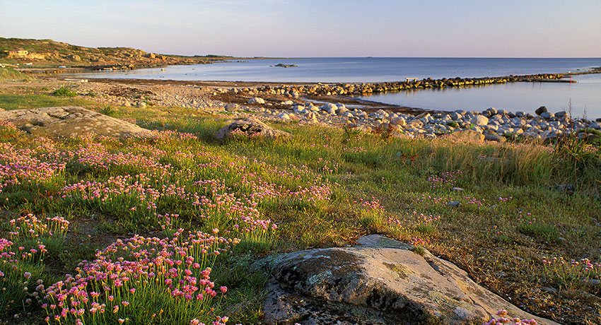 View of the Steninge Coast with flowering drift